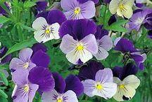 Maremma Flowers