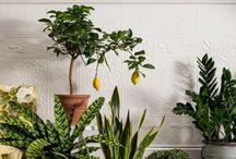 Dream plants