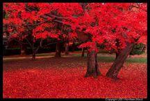 Árboles amarillos, naranjas y rojos otoño / espectaculares imágenes y fotos de árboles amarillos y bpreciosos.