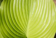 Drawing from Nature: Patterns, Textures, Layers & Light / Patterns, textures, layers and light provide design inspiration