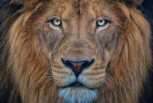 Lion Corp.