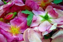 Floral Remedies