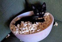 Cutie Cats / by Rhonda Tornow