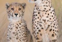 Best Safari Camps - Africa