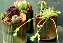 Container Creations from the Ruth Bancroft Nursery / Drought-tolerant containers arranged and sold from The Ruth Bancroft Garden nursery.  Interested in purchasing or learning  more, let us know!