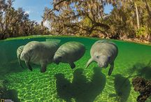 National Geographic: Best Photos of July 2013
