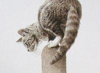Peintre, dessin (André Buzin) / Animalier : chats, renards, lièvres