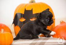 Happy Halloween / ...Halloween... kids, dogs & more....