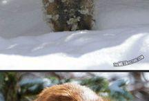 Foxes / Cute so cute so cute