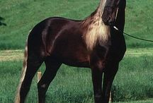 Horses / Giddi up