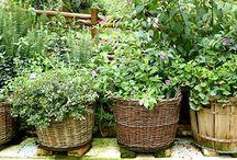 If I had a Garden............