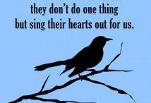 To Kill A Mockingbird / by Mary Kay Killian