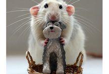 설치류 rodents