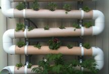 Aquaponics / by Growing The Home Garden