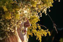 Litha, Midsummer, Summer Solstice, / by Ellen Maravillas of Wales