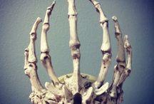 Ref: Bones & Skeletons