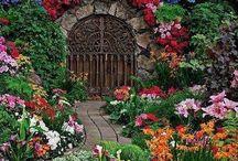 cortili con fiori