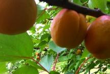 Frutta del mio giardino