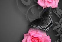 ピンクの花 11月22日