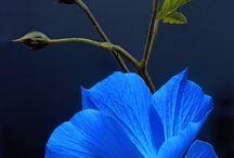 color.  Blue  Navy  Indigo
