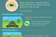 Perception brain