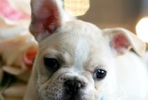 Frenchies!!