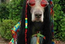 ☮ Spiritual Hippie ☮