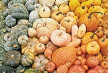 Pumpkins of all shades and sizes!