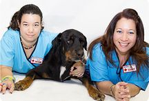 Broward Animal Hospital Team members / Our entire team is dedicated to providing high quality veterinary care for your pets. We look forward to providing the best veterinary care possible. Schedule your pet's appointment today: http://browardvets.com/contact-us.html