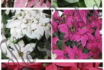 Decora la Navidad / Ideas para regalar o decorar tu casa estas Navidades