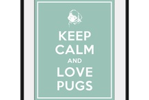 Dear pugs...love you...!! / I love pugs.... Pug is my best friend... They ply lyk kids freshns our mood they re so good i think we ol shuld hve one....!!