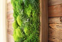Çim yosun vs