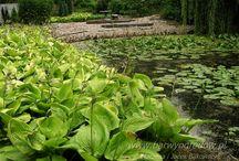 Byliny wysokie Perennials  Arboretum Trojanów