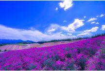 @JPNIAM (Japan) Instagram Liked Photos