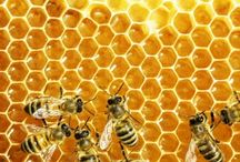 The 'Buzz' on Beekeeping / Interested in Beekeeping, but don't know where to start?  Check out these beginner guides and projects to get you started on your new hobby. / by Blain's Farm & Fleet