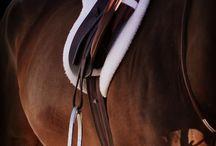 horses / by Kelsey Innis