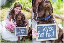 Dogs on wedding