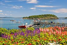 Maine / by Pat Smith