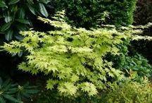 Plantes de sous bois