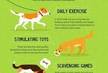 dog life
