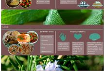 Ideas For Herb Gardens / Organically grown herbs - natural microbiotic organisms for healing of gut flora and immunity