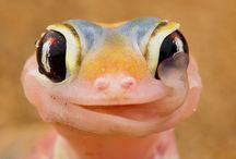 GeckosLife