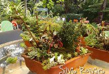 Miniature Garden Art / by Sonia Kertznus
