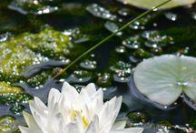 flores imagen