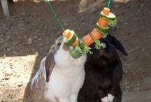 Mamas Kaninchenzeug
