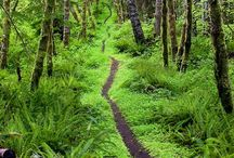 Bosques preciosos / Bosques Naturales afectados por la constancia de la naturaleza, una estafa para el ser humano, cuando vemos que aunque la naturaleza está damnificada, tiene un poder incalculable que hay que preservar, respetándolo, cuidándolo y anteponiendolo a otras necesidades.