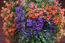 Цветы в подвесных корзинах