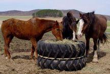 diy équitation