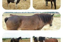 my heaven horses..... :-)