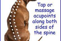 honden massage